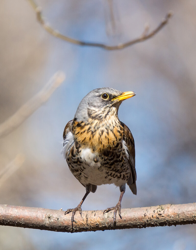 Bird Watching in Kalpitiya